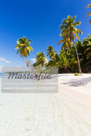 Coconut palm trees and white beach by turquoise clear water, Del Este National Park (Parque Nacional del Este), Dominican Republic, Caribbean Stock Photo - Premium Royalty-Free, Image code: 600-07311209