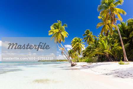 Coconut palm trees and white beach by turquoise clear water, Del Este National Park (Parque Nacional del Este), Dominican Republic, Caribbean Stock Photo - Premium Royalty-Free, Image code: 600-07311210
