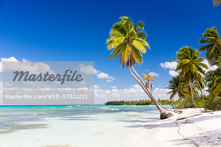 Coconut palm trees and white beach by turquoise clear water, Del Este National Park (Parque Nacional del Este), Dominican Republic, Caribbean Stock Photo - Premium Royalty-Free, Image code: 600-07311211