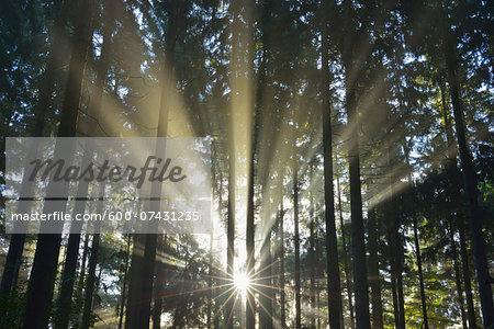 Sun shining through Forest, Schleswig-Holstein, Germany Stock Photo - Premium Royalty-Free, Image code: 600-07431235
