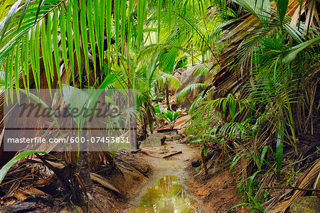 Pathway through Rainforest, Vallee de Mai Nature Preserve, Praslin, Seychelles Stock Photo - Premium Royalty-Free, Image code: 600-07453831
