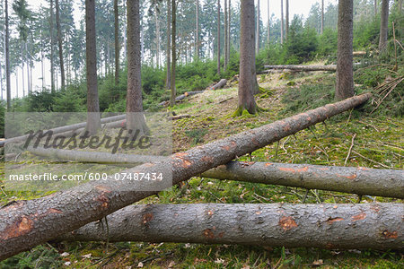 Felled spruces in forest, Spessart, Hesse, Germany, Europe Stock Photo - Premium Royalty-Free, Image code: 600-07487434