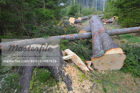 Felled spruces in forest, Spessart, Hesse, Germany, Europe Stock Photo - Premium Royalty-Free, Image code: 600-07487435