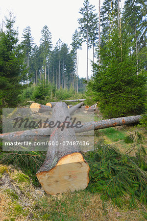 Felled spruces in forest, Spessart, Hesse, Germany, Europe Stock Photo - Premium Royalty-Free, Image code: 600-07487436