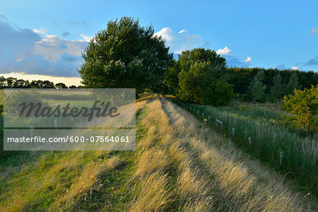 Dike in Summer, Fluegger Watt, Baltic Island of Fehmarn, Schleswig-Holstein, Germany Stock Photo - Premium Royalty-Free, Image code: 600-07564061