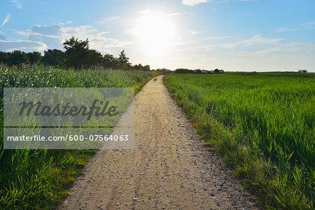 Path at Fluegger Watt with Sun, Baltic Island of Fehmarn, Schleswig-Holstein, Germany