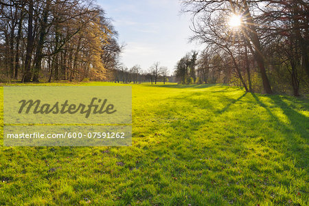 Meadow in Forest with Sun in early Spring, Park Schonbusch, Aschaffenburg, Spessart, Lower Franconia, Bavaria, Germany Stock Photo - Premium Royalty-Free, Image code: 600-07591262