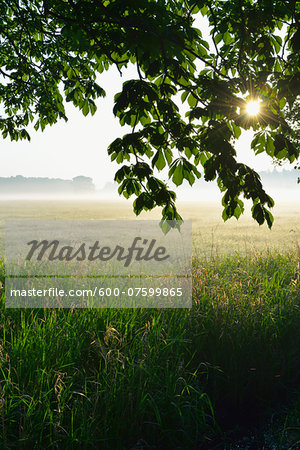 Branches of a chestnut tree and field in morning mist, Nature Reserve Moenchbruch, Moerfelden-Walldorf, Hesse, Germany, Europe Stock Photo - Premium Royalty-Free, Image code: 600-07599865