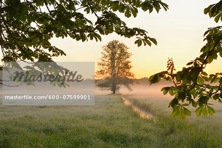 Tree branche and tree in field in early mornging light, Nature Reserve Moenchbruch, Moerfelden-Walldorf, Hesse, Germany, Europe Stock Photo - Premium Royalty-Free, Image code: 600-07599901