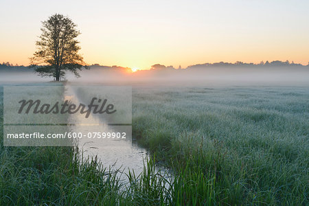 Tree and field at sunrise, Nature Reserve Moenchbruch, Moerfelden-Walldorf, Hesse, Germany, Europe Stock Photo - Premium Royalty-Free, Image code: 600-07599902