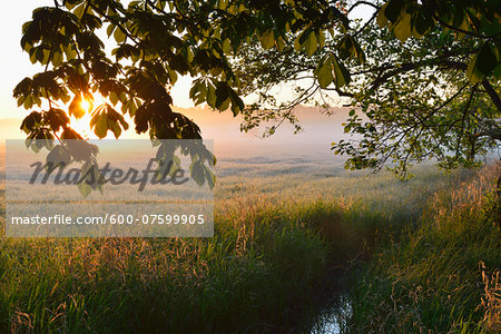 Trees branches and field at sunrise, Nature Reserve Moenchbruch, Moerfelden-Walldorf, Hesse, Germany, Europe Stock Photo - Premium Royalty-Free, Image code: 600-07599905