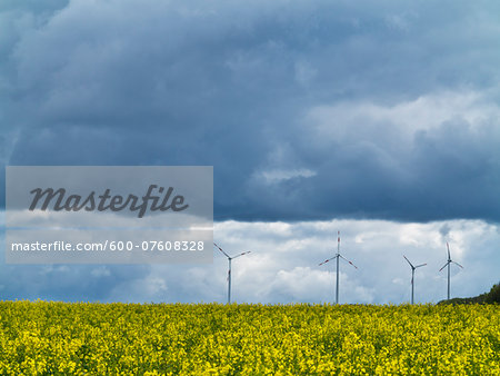 Wind turbines with canola field in foreground with stormy sky, Weser Hills, North Rhine-Westphalia, Germany