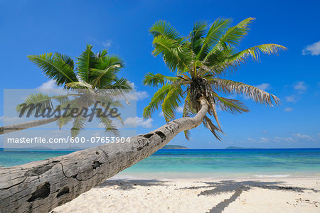 Palm Trees on Beach with Indian Ocean, La Digue, Seychelles Stock Photo - Premium Royalty-Free, Image code: 600-07653904