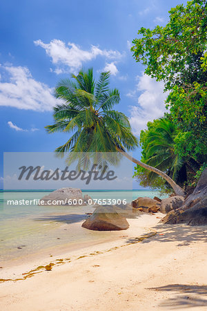 Rocks and Palm Trees at Beach, Anse a la Mouche, Mahe, Seychelles Stock Photo - Premium Royalty-Free, Image code: 600-07653906