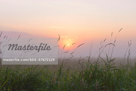 Close-up of blades of Grass on misty morning at sunrise, Nature Reserve Moenchbruch, Moerfelden-Walldorf, Hesse, Germany, Europe Stock Photo - Premium Royalty-Free, Image code: 600-07672129