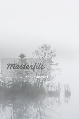 Lake Barmsee in Morning Mist, Werdenfelser Land, Upper Bavaria, Bavaria, Germany Stock Photo - Premium Royalty-Free, Image code: 600-07802851
