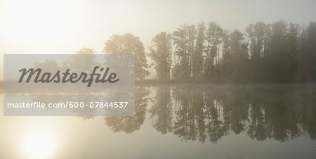 Common Alder (Alnus glutinosa) Trees beside Lake in Early Morning in Autumn, Bavaria, Germany Stock Photo - Premium Royalty-Free, Image code: 600-07844537