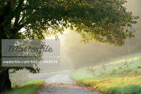 Scenic view of tree branches hanging over a pathway on a foggy morning in autumn, Upper Palatinate, Bavaria, Germany