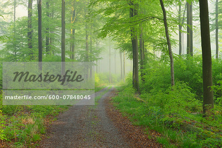 Path through Beech Forest, Spessart, Bavaria, Germany, Europe Stock Photo - Premium Royalty-Free, Image code: 600-07848045