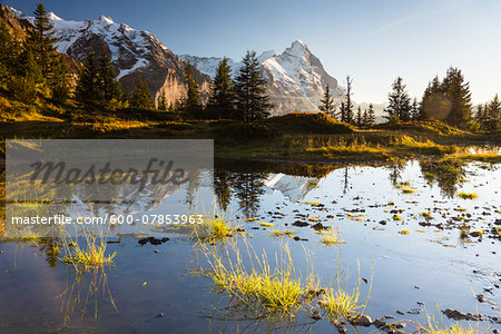 Mountain Fir Trees Reflecting in Alpine Lake with Mount Eiger at Sunset, Bernese Alps, Switzerland Stock Photo - Premium Royalty-Free, Image code: 600-07853963
