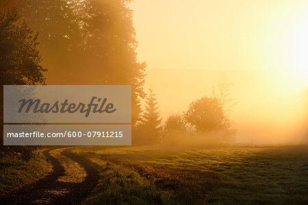 Landscape at sunrise, glowing on an early, foggy morning, Bavarian Forest National Park, Bavaria, Germany