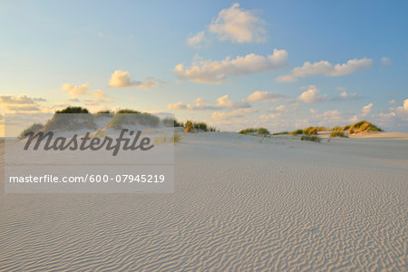 Dunes in Summer at sunset, Norderney, East Frisia Island, North Sea, Lower Saxony, Germany Stock Photo - Premium Royalty-Free, Image code: 600-07945219