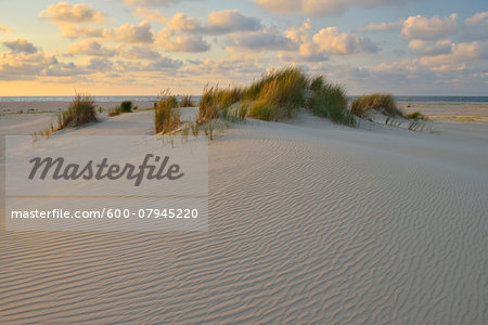 Dunes in Summer at sunset, Norderney, East Frisia Island, North Sea, Lower Saxony, Germany Stock Photo - Premium Royalty-Free, Image code: 600-07945220