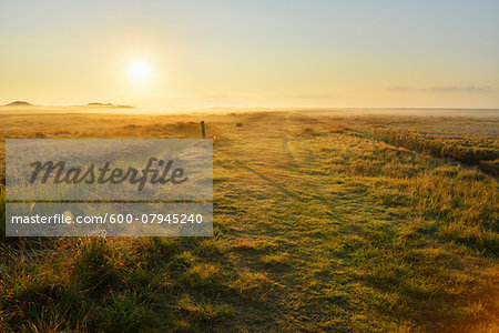 Countryside with Morning Mist in Summer, Norderney, East Frisia Island, North Sea, Lower Saxony, Germany Stock Photo - Premium Royalty-Free, Image code: 600-07945240