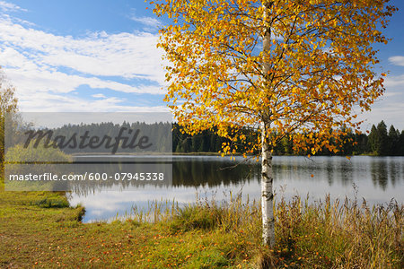 Lake in Autumn, Hegratsried, Lake Hegratsrieder See, Bavaria, Germany Stock Photo - Premium Royalty-Free, Image code: 600-07945338