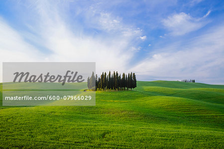 Cypress Grove near San Quirico d'Orcia, Val d'Orcia, Siena, Tuscany, Italy Stock Photo - Premium Royalty-Free, Image code: 600-07966029