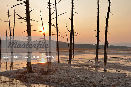 Dead Pine Trees in Fountain Paint Pot at Sunset, Lower Geyser Basin, Yellowstone National Park, Wyoming, USA Stock Photo - Premium Royalty-Free, Image code: 600-08002216