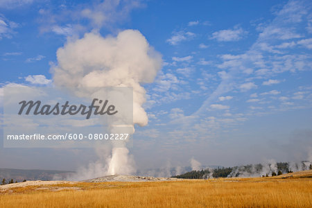 Old Faithful Geyser Erupting, Upper Geyser Basin, Yellowstone National Park, Teton County, Wyoming, USA Stock Photo - Premium Royalty-Free, Image code: 600-08002227