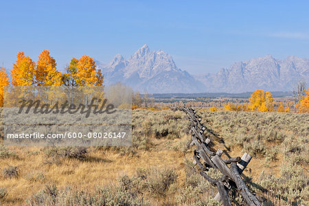 Buck and rail fence with Teton Mountain Range in background, Jackson, Grand Teton, Grand Teton National Park, Wyoming, USA Stock Photo - Premium Royalty-Free, Image code: 600-08026147