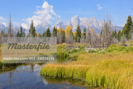 Schwabacher Landing with Teton mountain range in background, autumn, Snake River, Jackson Hole, Grand Teton National Park, Wyoming, USA Stock Photo - Premium Royalty-Free, Image code: 600-08026156