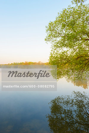 Lake and Trees in Early Morning Light, Lake Erlensee, Hanau, Hesse, Germany Stock Photo - Premium Royalty-Free, Image code: 600-08082795