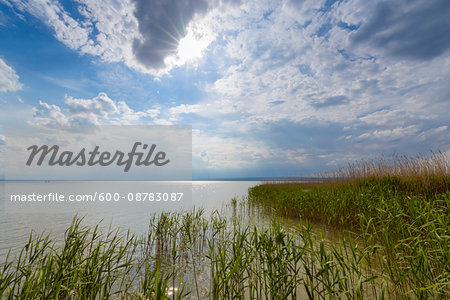 Reeds at Lake Neusiedl with Sun at Weiden am See, Burgenland, Austria