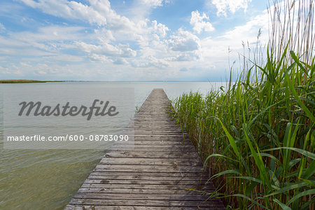 Wooden Jetty with Reeds at Weiden am See, Lake Neusiedl, Burgenland, Austria