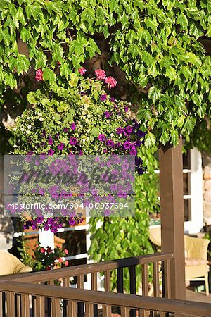 Porch and plants Stock Photo - Premium Royalty-Free, Image code: 604-00937694