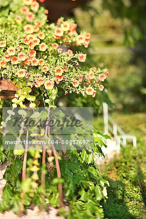 Plants Stock Photo - Premium Royalty-Free, Image code: 604-00937697