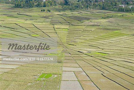 Indonesia, Flores, near Ruteng, cobweb-shaped ricefields Stock Photo - Premium Royalty-Free, Image code: 610-01577374