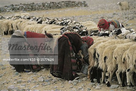 Tibet, Samsang area, goat milking Stock Photo - Premium Royalty-Free, Image code: 610-01577626