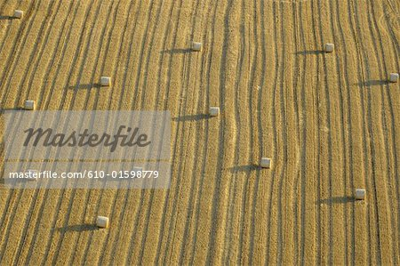 Wheat Field - Agriculture Panorama Stock Footage Video 6638390 ...