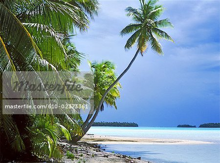 French Polynesia, Tuamotus, Rangiroa, the blue lagoon Stock Photo - Premium Royalty-Free, Image code: 610-02373361