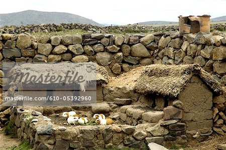 Peru, Sillustani, guinea pigs farming Stock Photo - Premium Royalty-Free, Image code: 610-05392960