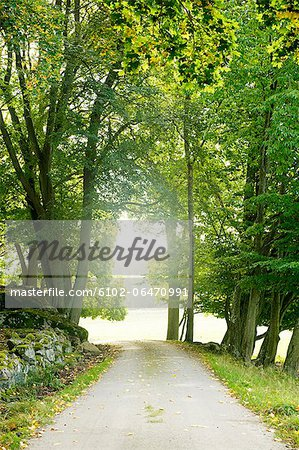 Treelined path Stock Photo - Premium Royalty-Free, Image code: 6102-06470991