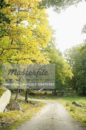 Path in park Stock Photo - Premium Royalty-Free, Image code: 6102-06470992