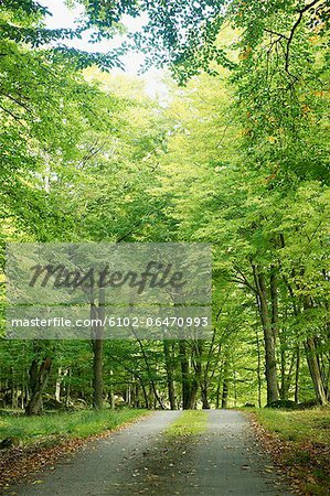 Path through forest Stock Photo - Premium Royalty-Free, Image code: 6102-06470993