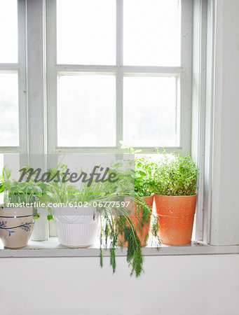 Herbs on window sill Stock Photo - Premium Royalty-Free, Image code: 6102-06777597