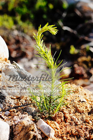 Close-up of plant Stock Photo - Premium Royalty-Free, Image code: 6102-06965728