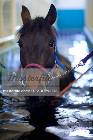 Horse having hydrotherapy treatment Stock Photo - Premium Royalty-Free, Image code: 6102-07790141